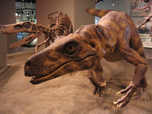 http://planetdi.startlogic.com/dinosaur_list/images/herrerasaurus_web.jpg