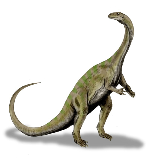 Massospondylus carinatus Dinosaur - Herbivore Dinosaurs - Planet ...
