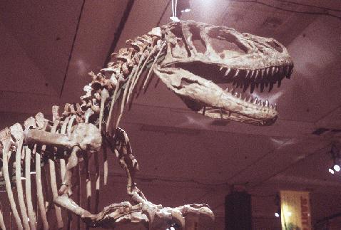 Yangchuanosaurus shangyouensis